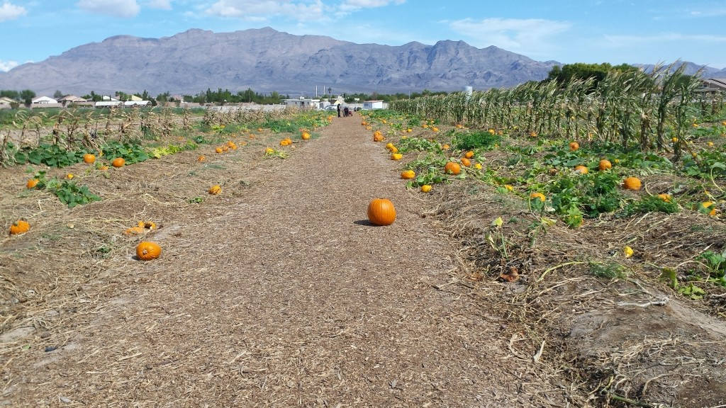 Gilcrease Orchard 2015